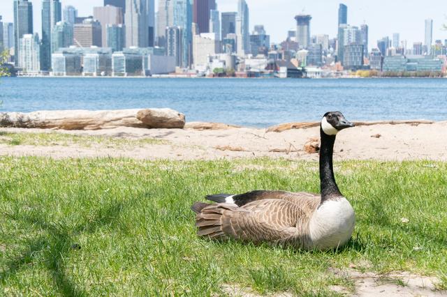 カナダ留学のメリット3
